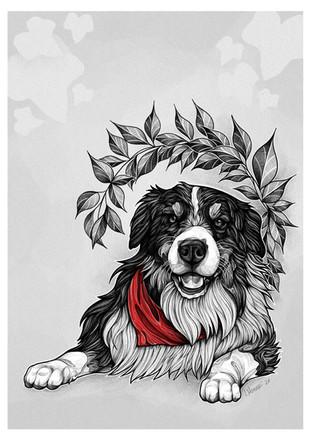 Mikka - Dog Portrait