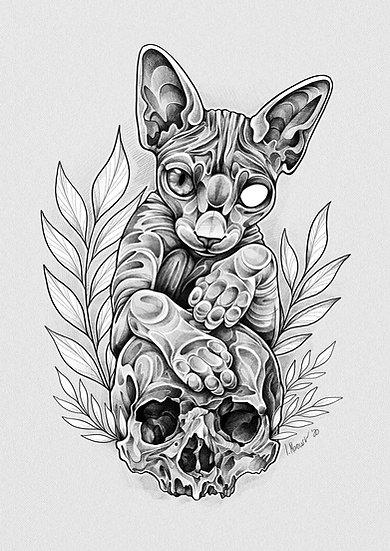 Fine Art Print - Sphynx
