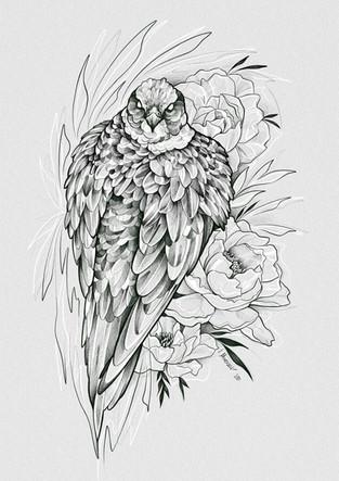 Falke - Zeichnung / 2020