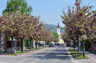 stromy1.jpg