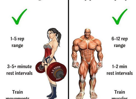 What Is Hypertrophy And How Relevant Is It To My Training?