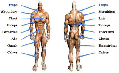 Big And Small Muscle Groups; What You Need To Know & Its Importance