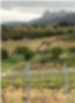 Ramon Bilbao vigne site.JPG
