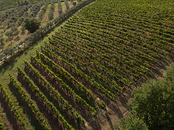 Alma Toscane 2.jpg