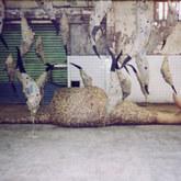 蟬與蛹的單向敘述_007.jpg