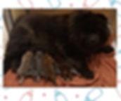 foto cuccioli 3.JPG