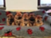 cuccioli coccinelle 3.jpg