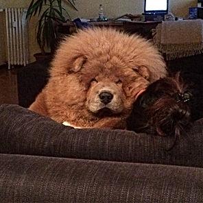 cane dalla lingua viola