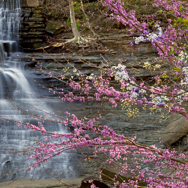 Spring Blooms with Waterfall