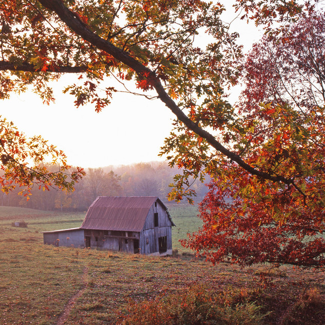 Barn framed by Tree crop 2 102m.jpg