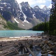 Moraine Lake Timbers