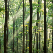 Lightshafts in the Forest