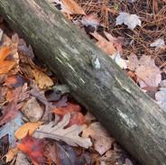 Log & Leaves