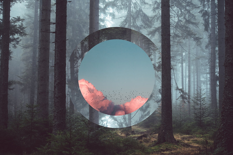 69915_Forest_with_circle_of_clouds.jpg