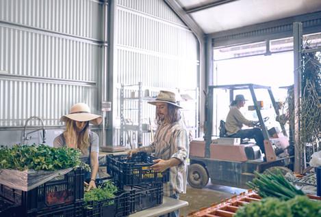 Packaging free vegetable store