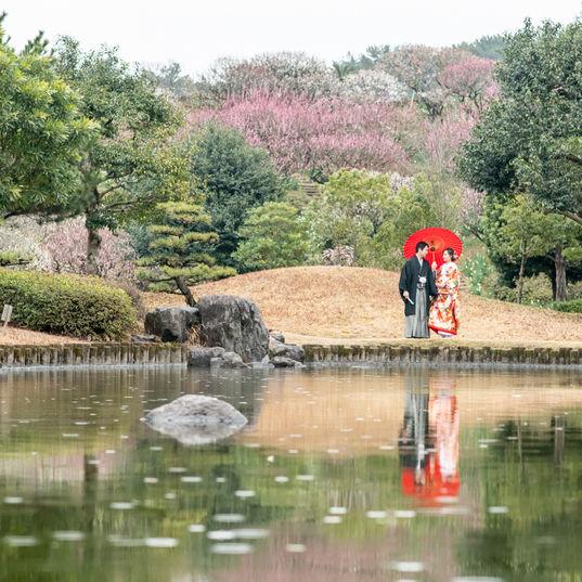 #鹿児島#和装#色内掛#桜#吉野公園