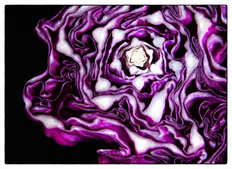 photography vegetables Purple cabbage.