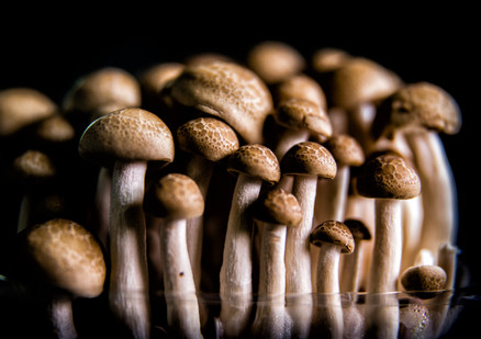 photography vegetables art Mushroom
