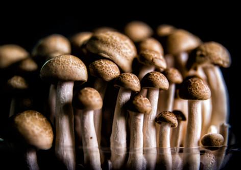 photography vegetables art Mushroom