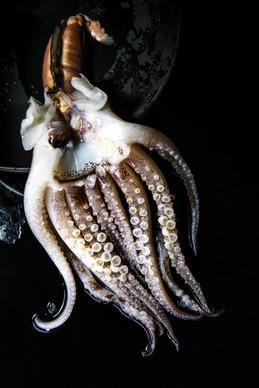 Food art concept octopus, in Bangkok,Thailand.