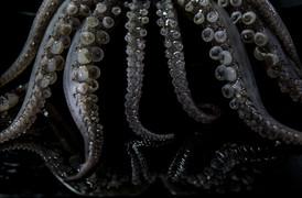 Photographer,Food art concept octopus, in Bangkok,Thailand.