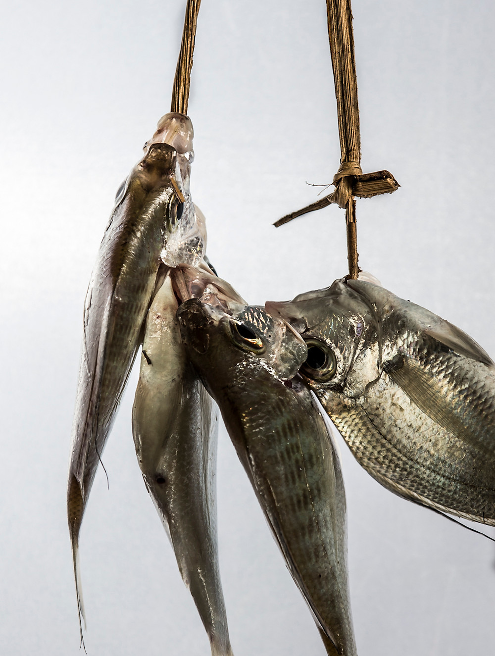Fish food creative