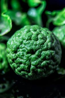 photography vegetables art  Bergamot.