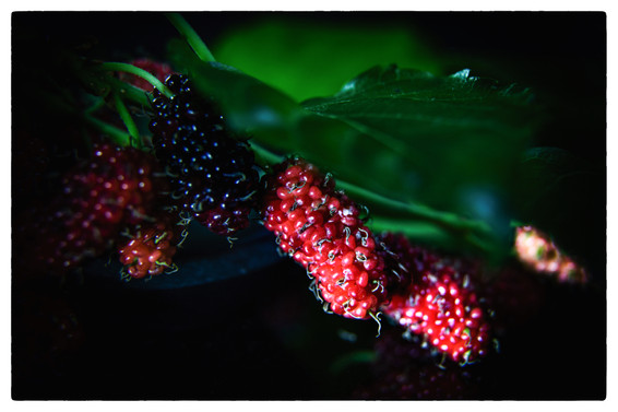 photography vegetables art Mulberry
