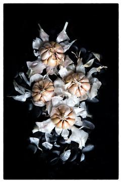 photography vegetables Garlic.