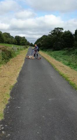 St Patrick's Pilgrim Walk  - Day 2 - Sun, 20 September 2020