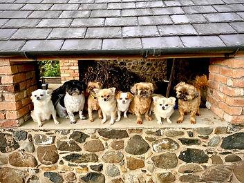 The team dogs.JPG