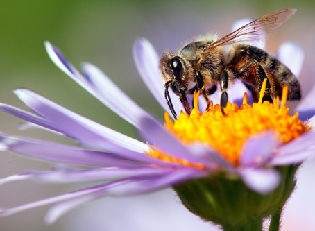 Are we bee-ing too unfair towards bees?