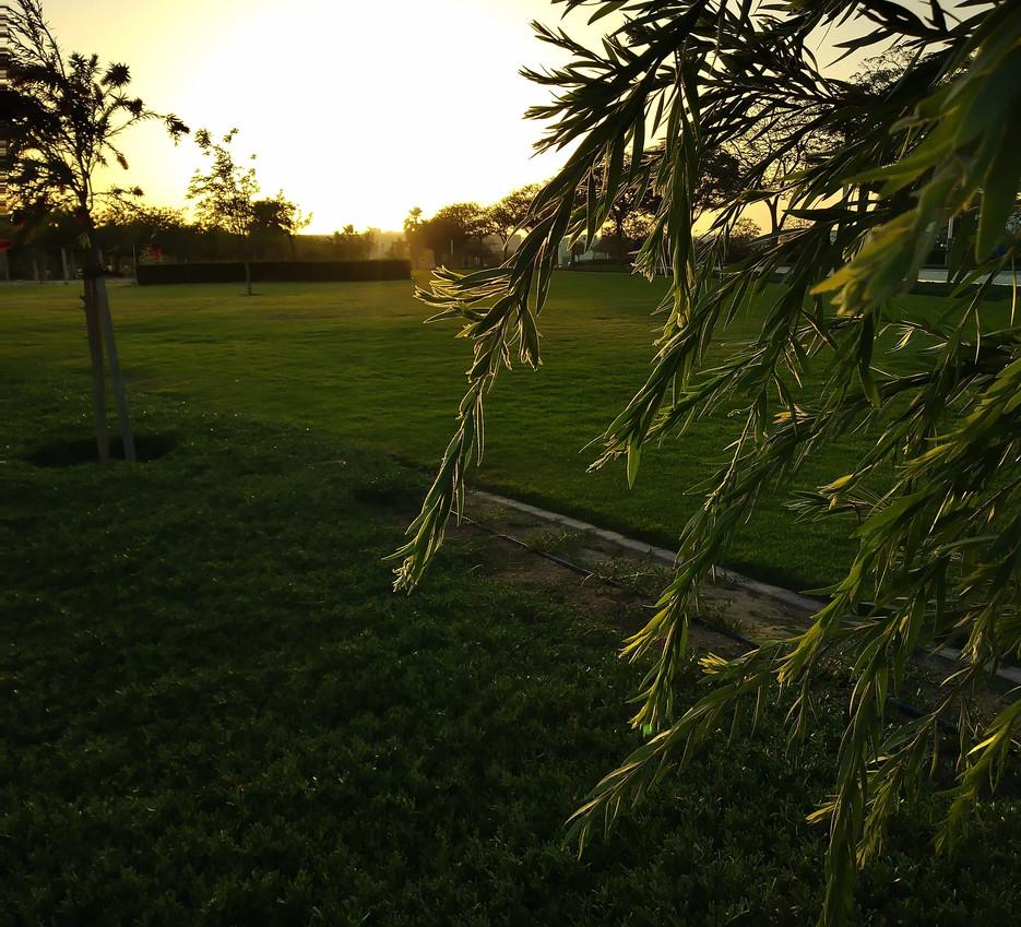 Peeking Leaves - Elizabeth Ann
