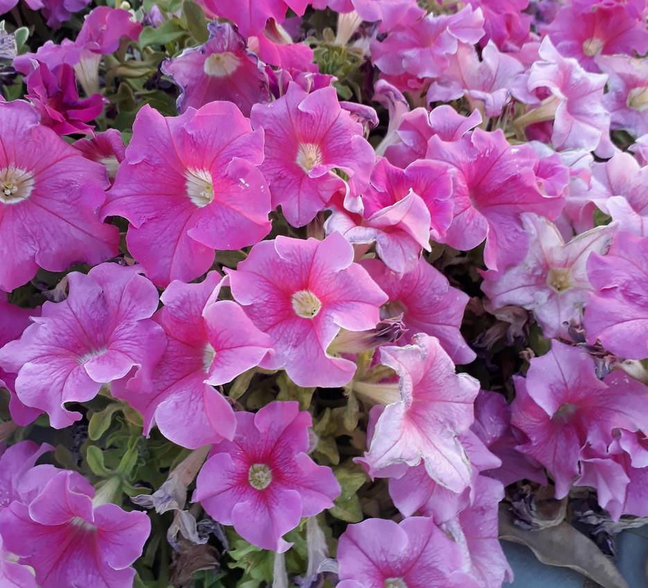 Wild Bouquet - Elizabeth Ann