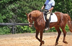 dressage horseback riding