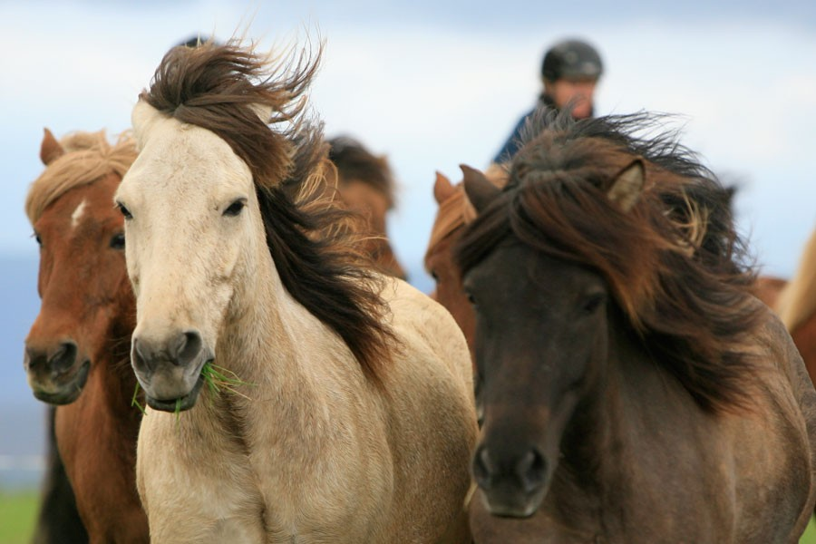 horse-e1437494977168