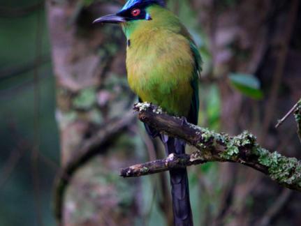 Café y aves como ingredientes de la paz: breve diario de misión del Fondo a Planadas, Tolima.