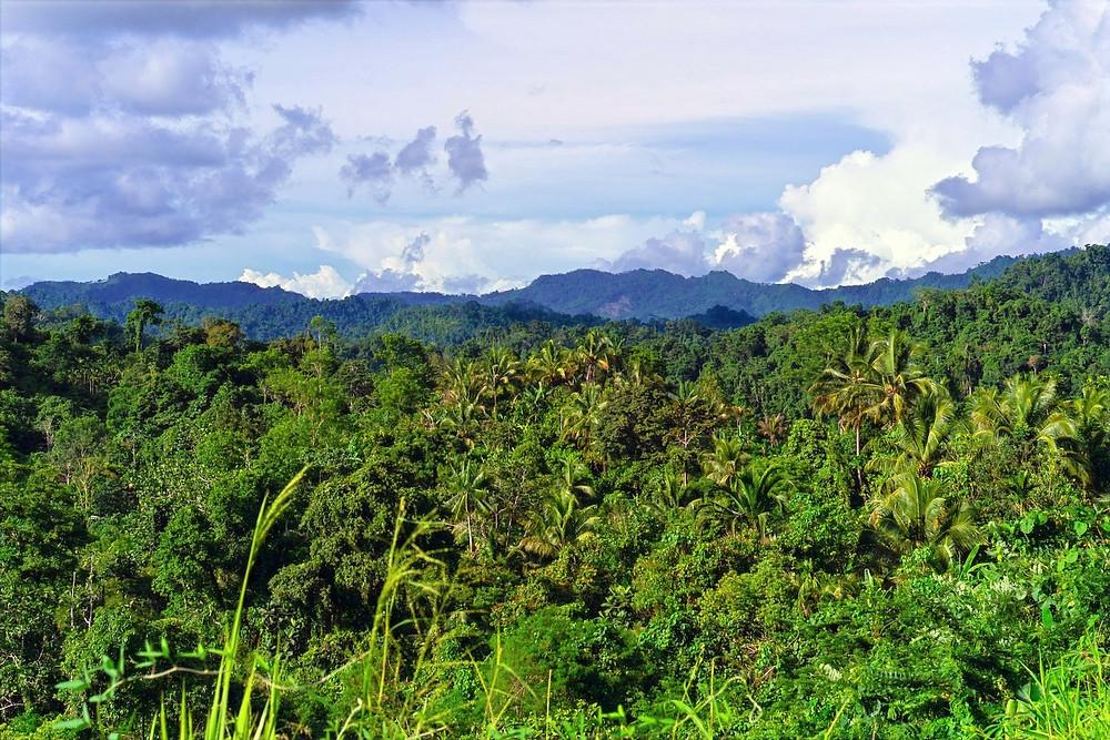 Floresta na Papua-Nova Guiné