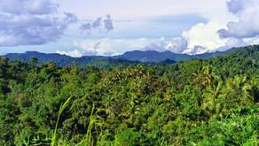 Nova Guiné é a ilha com a flora mais exuberante