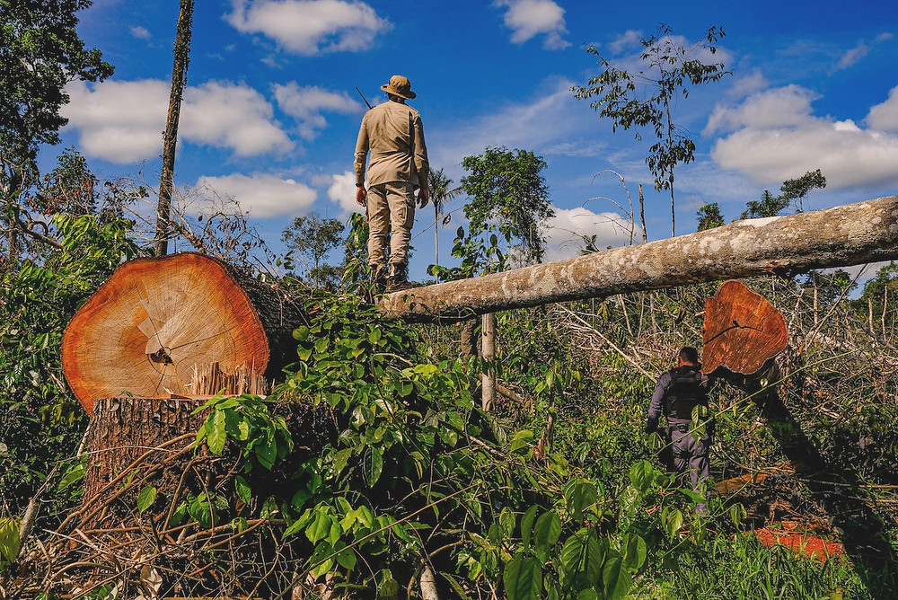 Desmatamento no Mato Grosso