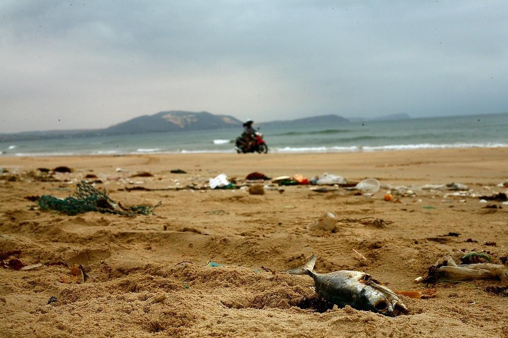 Peixe morto e lixo na praia
