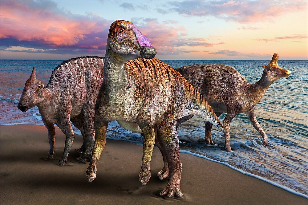 Yamatosaurus izanagii