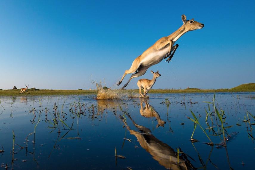 Vida selvagem em Botsuana