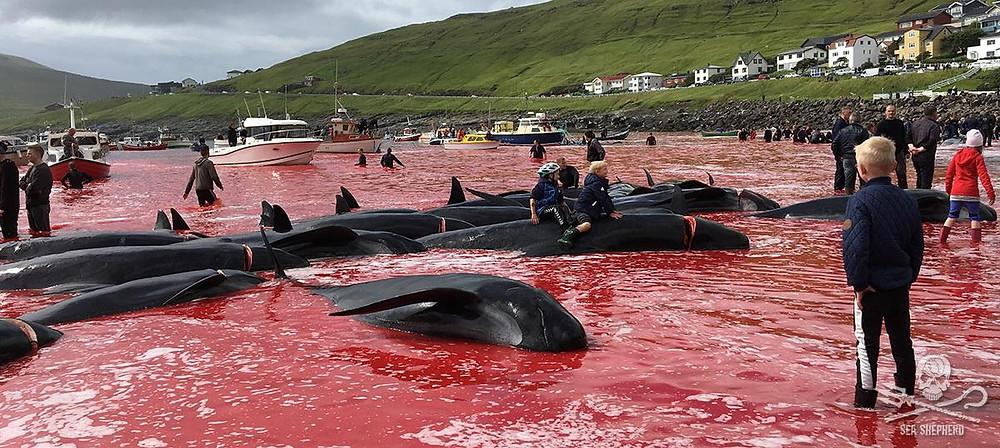 Baleias mortas