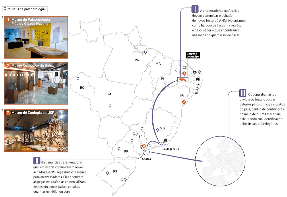 Gráfico sobre contrabando de fósseis