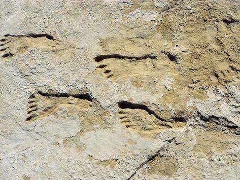 Humanos já estavam nas Américas 23 mil anos atrás