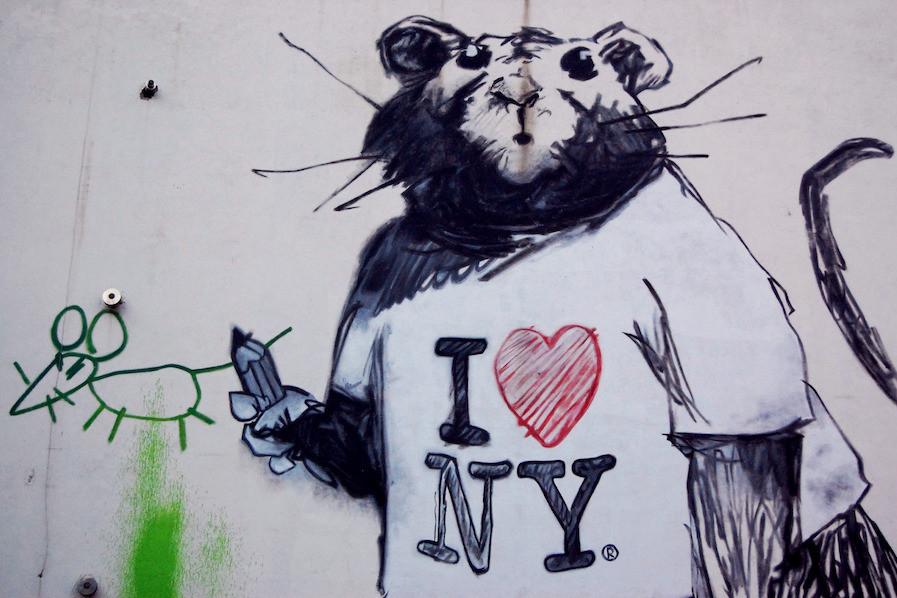 street de rato em Nova York