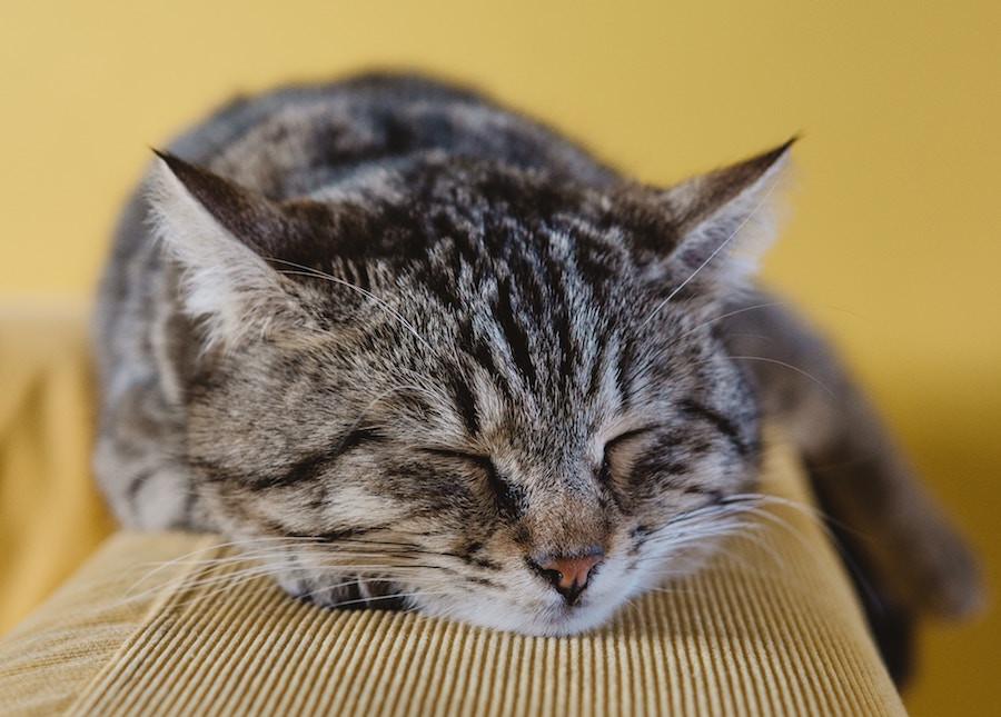 Gato dormindo num estofado