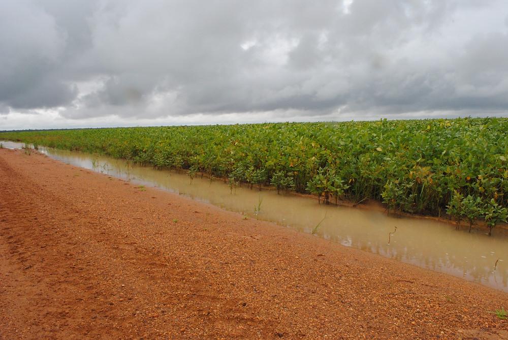 Alto Xingu: estrada e soja