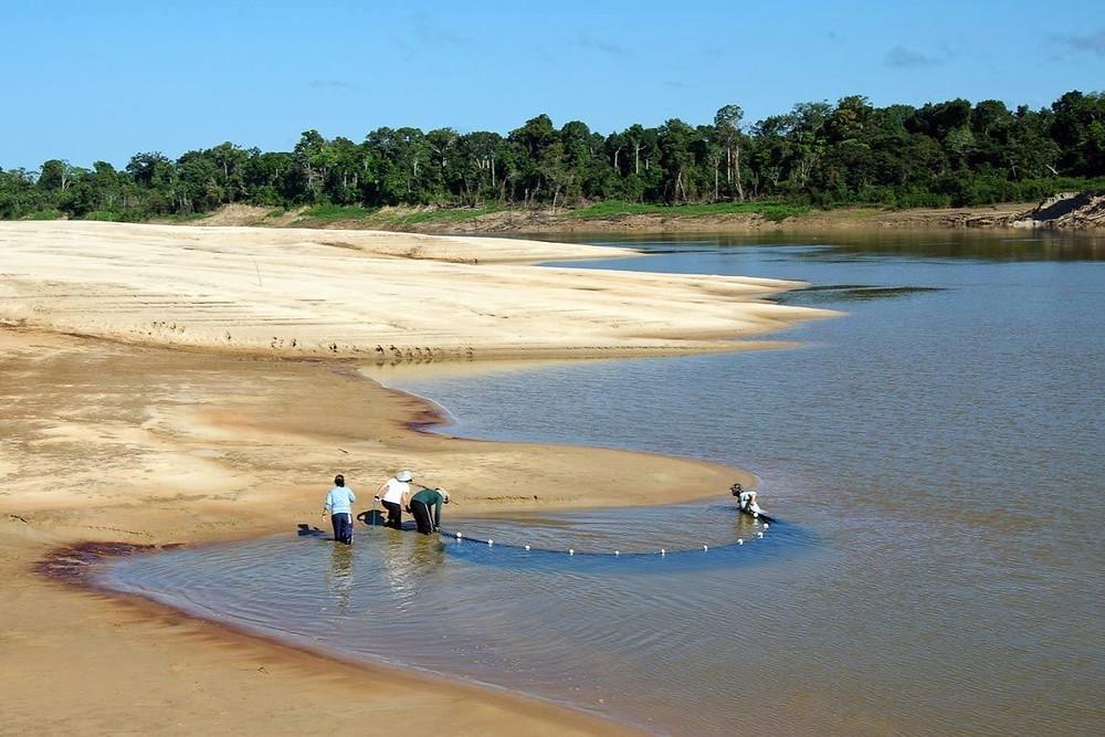 Rio Javari, Amazônia
